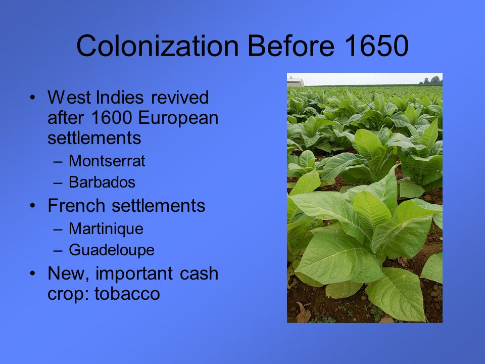 Colonization Before 1650 West Indies revived after 1600 European settlements –Montserrat –Barbados French settlements –Martinique –Guadeloupe New, imp