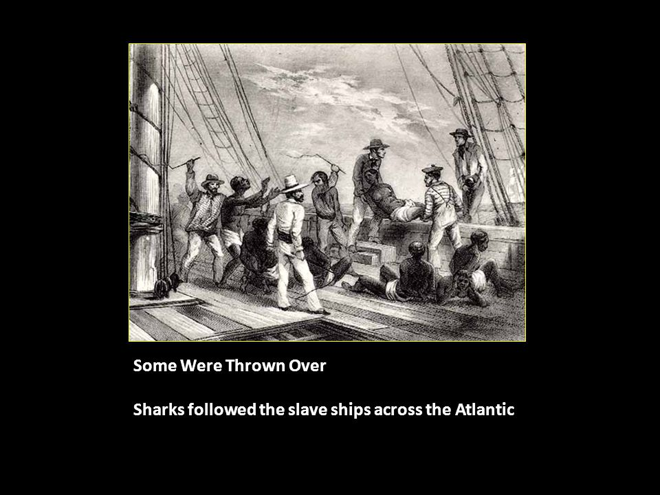 Some Were Thrown Over Sharks followed the slave ships across the Atlantic