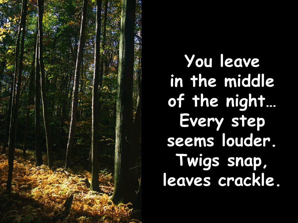 You leave in the middle of the night… Every step seems louder. Twigs snap, leaves crackle.