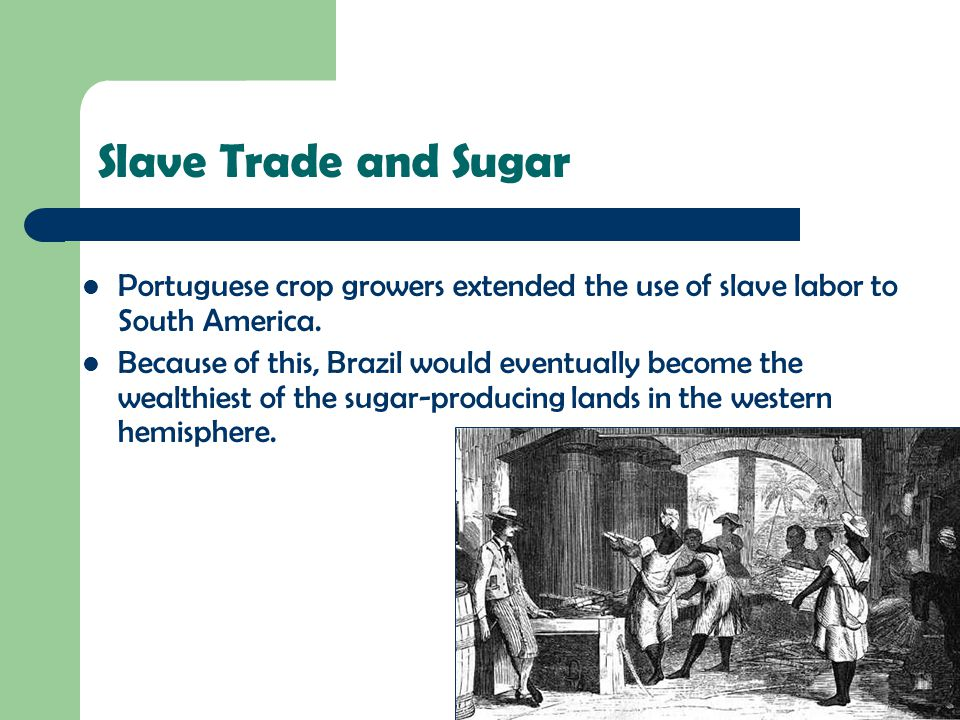 Slave Trade and Sugar Portuguese crop growers extended the use of slave labor to South America. Because of this, Brazil would eventually become the we