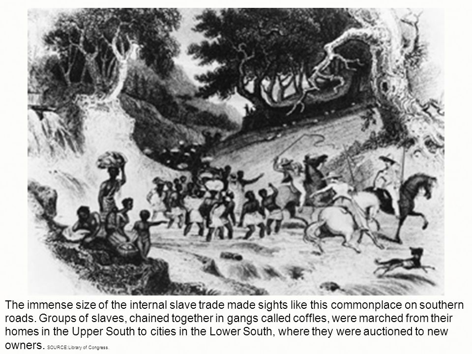 The immense size of the internal slave trade made sights like this commonplace on southern roads. Groups of slaves, chained together in gangs called c