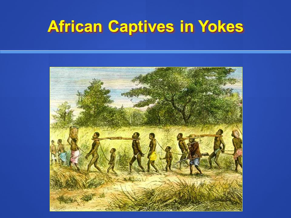 The Atlantic Slave Trade 3.Slavery Spreads Throughout the Americas a.