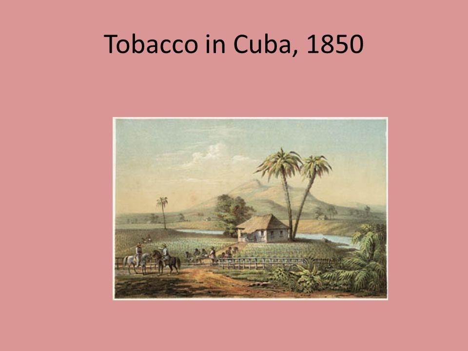 Tobacco in Cuba, 1850