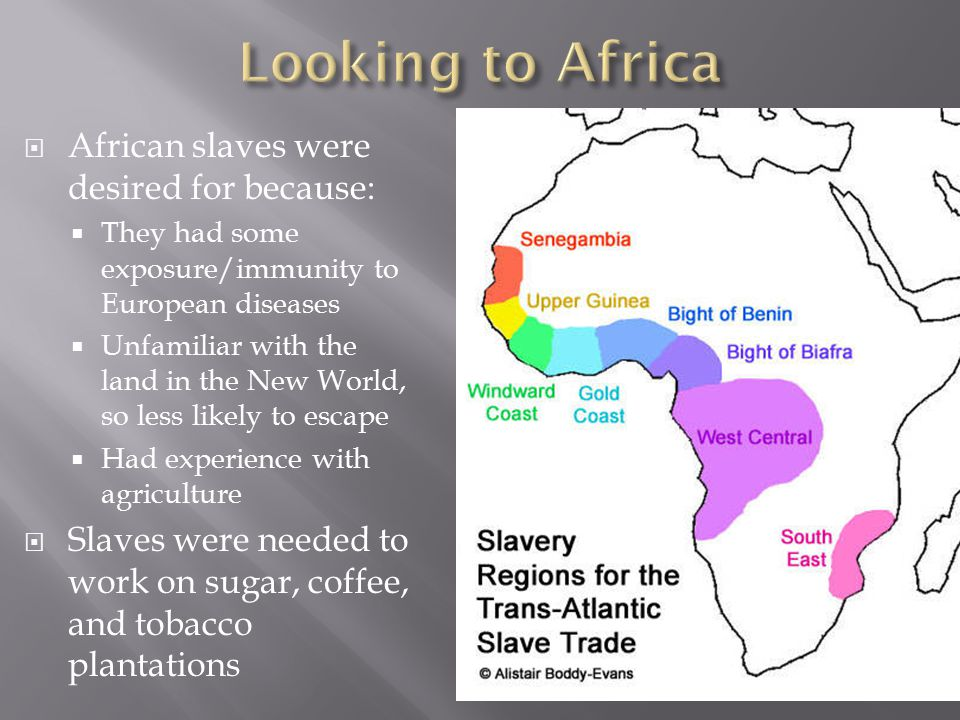 African slaves were desired for because:  They had some exposure/immunity to European diseases  Unfamiliar with the land in the New World, so less likely to escape  Had experience with agriculture  Slaves were needed to work on sugar, coffee, and tobacco plantations
