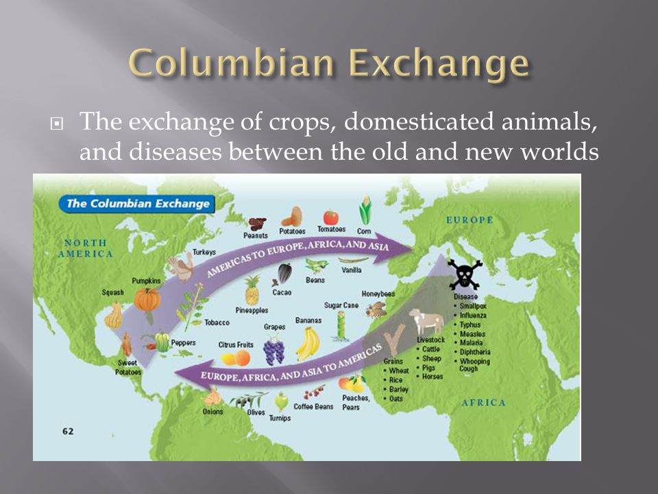  Portuguese and Spanish began the movement of slaves from African to the New World  Triangular Trade: Established a trading network  Raw materials (Cash crops)  Manufactured goods  Slaves  Columbian Exchange  Domesticated animals, crops, and disease