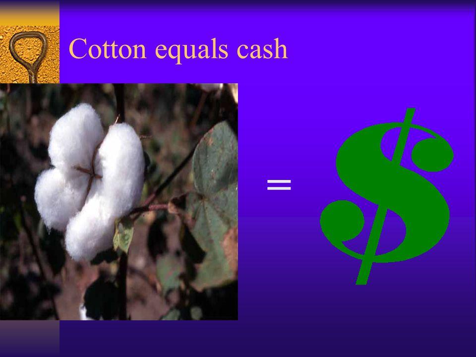 = Cotton equals cash