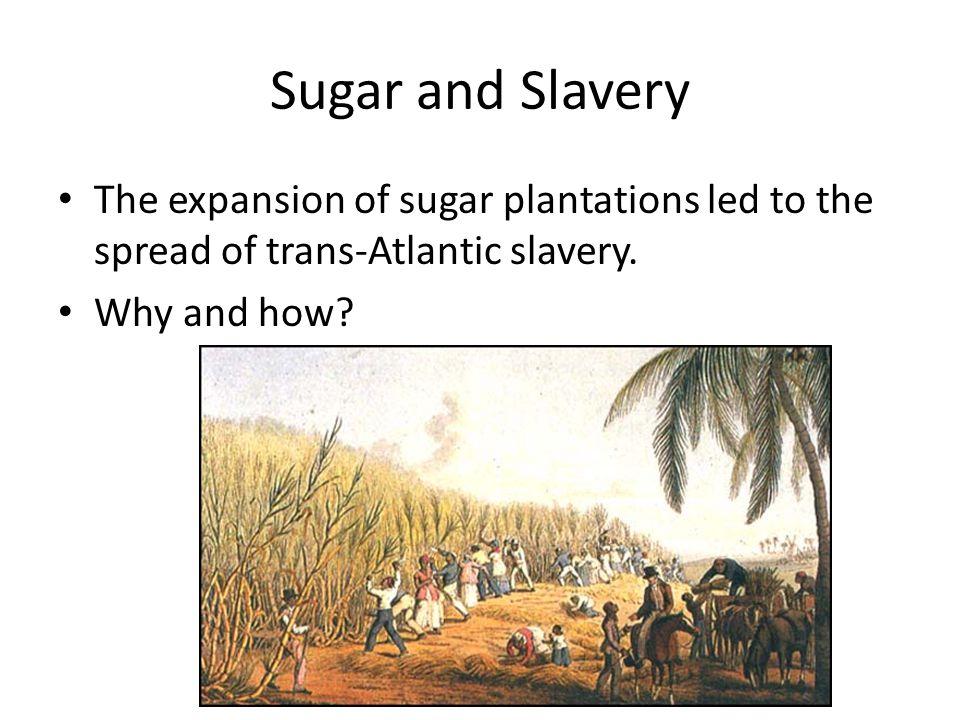 Sugar and Slavery Sugar plantations are labor Intensive year round.