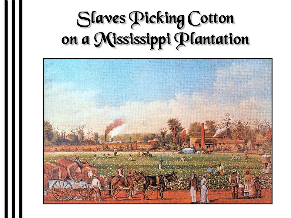 Slaves Picking Cotton on a Mississippi Plantation