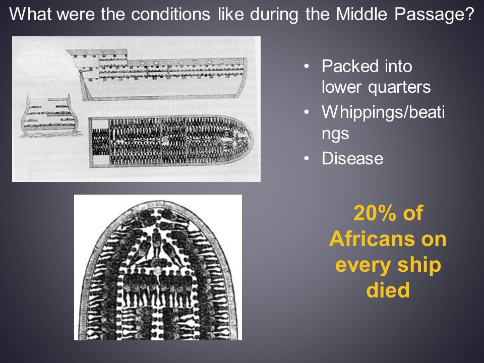 What were the conditions like during the Middle Passage? Packed into lower quarters Whippings/beati ngs Disease 20% of Africans on every ship died