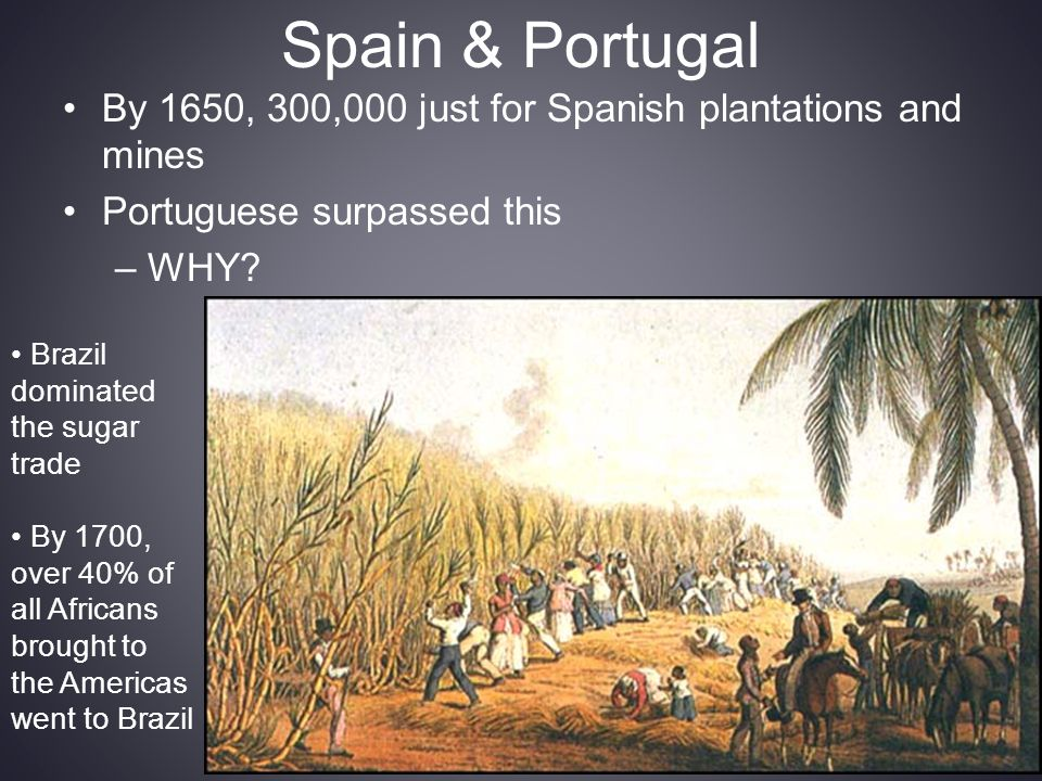 Spain & Portugal By 1650, 300,000 just for Spanish plantations and mines Portuguese surpassed this –WHY? Brazil dominated the sugar trade By 1700, ove