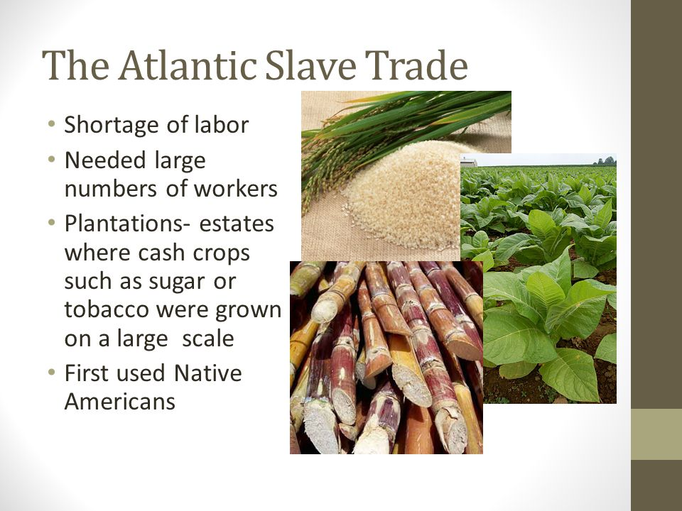 The Atlantic Slave Trade Shortage of labor Needed large numbers of workers Plantations- estates where cash crops such as sugar or tobacco were grown o
