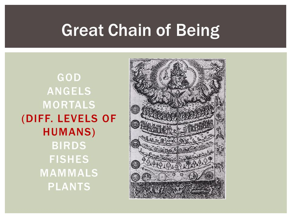 GOD ANGELS MORTALS (DIFF. LEVELS OF HUMANS) BIRDS FISHES MAMMALS PLANTS Great Chain of Being