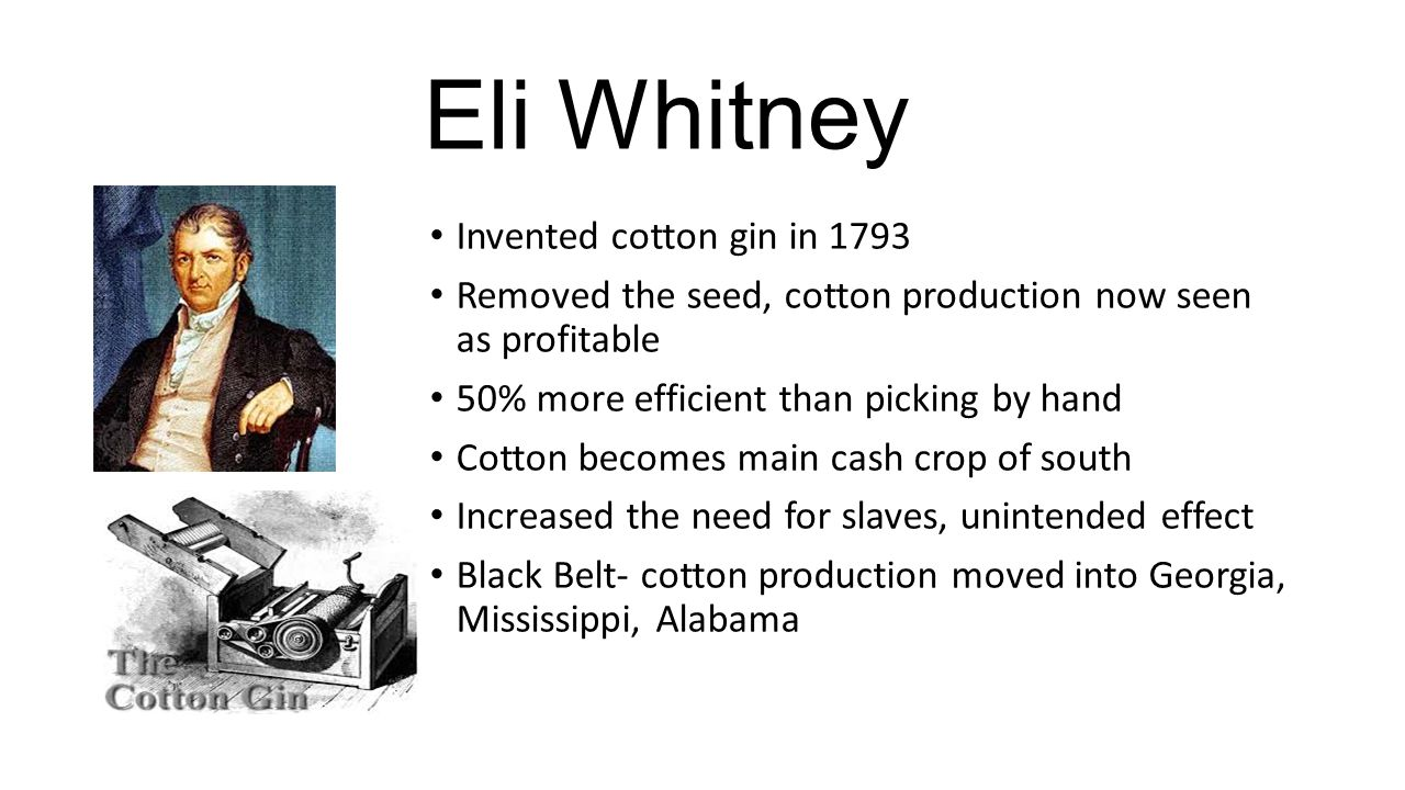 Eli Whitney Invented cotton gin in 1793 Removed the seed, cotton production now seen as profitable 50% more efficient than picking by hand Cotton beco
