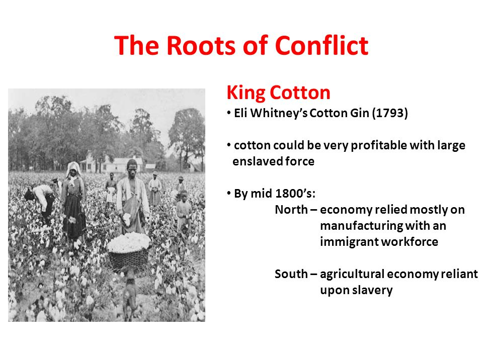 The Roots of Conflict King Cotton Eli Whitney's Cotton Gin (1793) cotton could be very profitable with large enslaved force By mid 1800's: North – eco