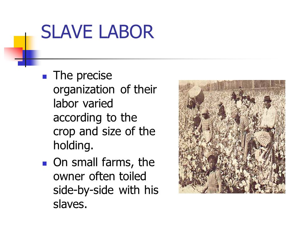 SLAVE LABOR The precise organization of their labor varied according to the crop and size of the holding. On small farms, the owner often toiled side-