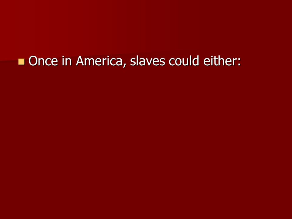 Once in America, slaves could either: Once in America, slaves could either: