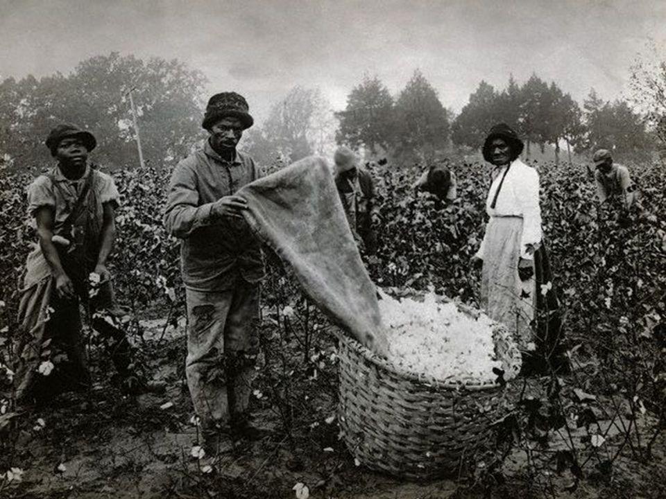 The White Majority Small Slave Owners… Whites w/o slaves… Flatland Whites & Mountain Whites… Subsistence Farming American Dream Free Blacks…