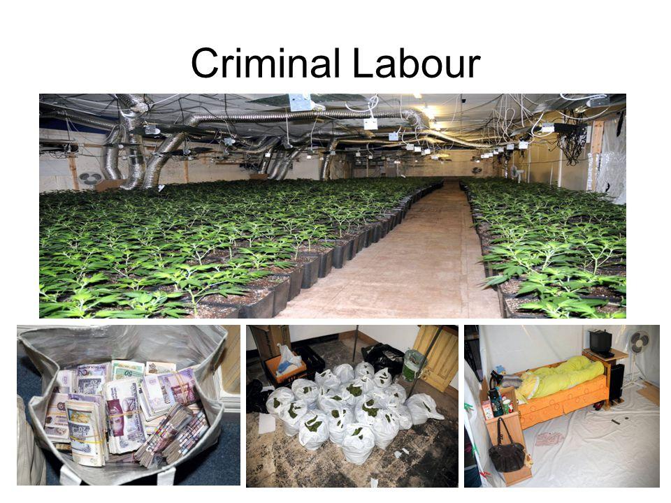 Criminal Labour