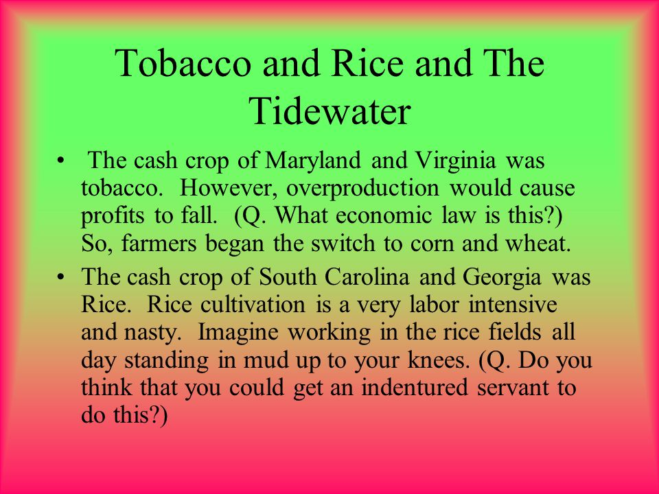 Tobacco and Rice and The Tidewater The cash crop of Maryland and Virginia was tobacco. However, overproduction would cause profits to fall. (Q. What e