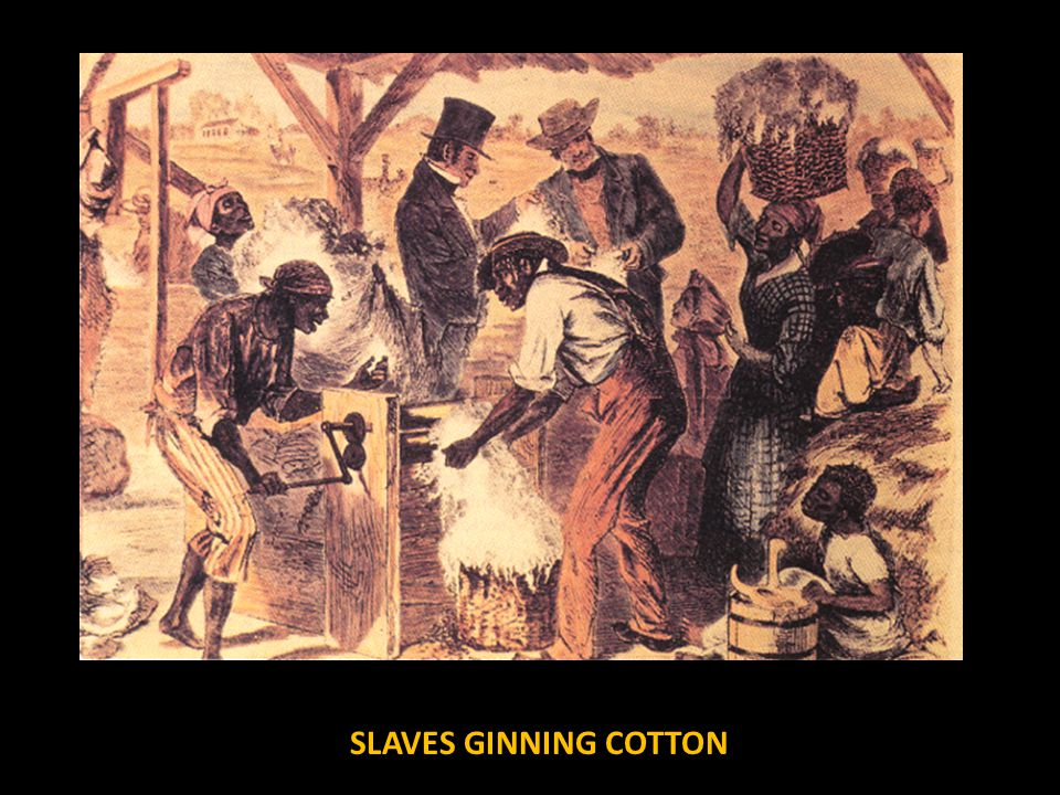 SLAVES GINNING COTTON