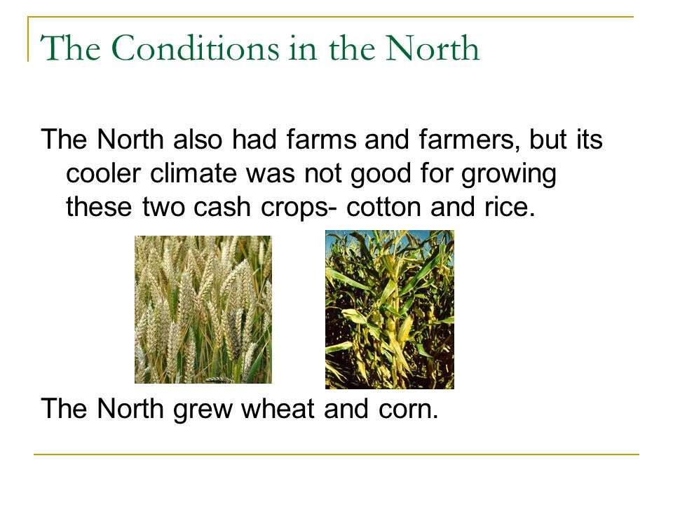 The Conditions in the North The North also had farms and farmers, but its cooler climate was not good for growing these two cash crops- cotton and ric