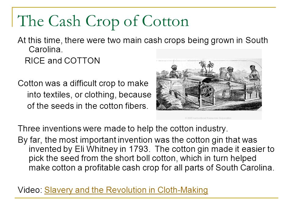 The Cash Crop of Cotton At this time, there were two main cash crops being grown in South Carolina. RICE and COTTON Cotton was a difficult crop to mak