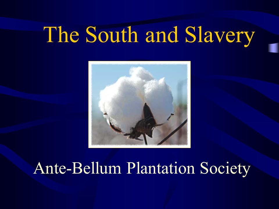 The South and Slavery Ante-Bellum Plantation Society