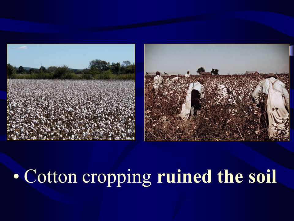 Cotton cropping ruined the soil