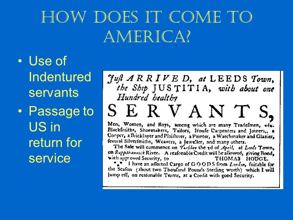How does it come to America? Use of Indentured servants Passage to US in return for service