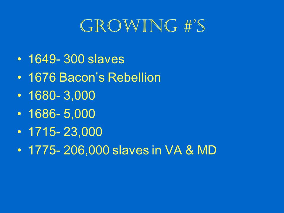 Growing #'s 1649- 300 slaves 1676 Bacon's Rebellion 1680- 3,000 1686- 5,000 1715- 23,000 1775- 206,000 slaves in VA & MD