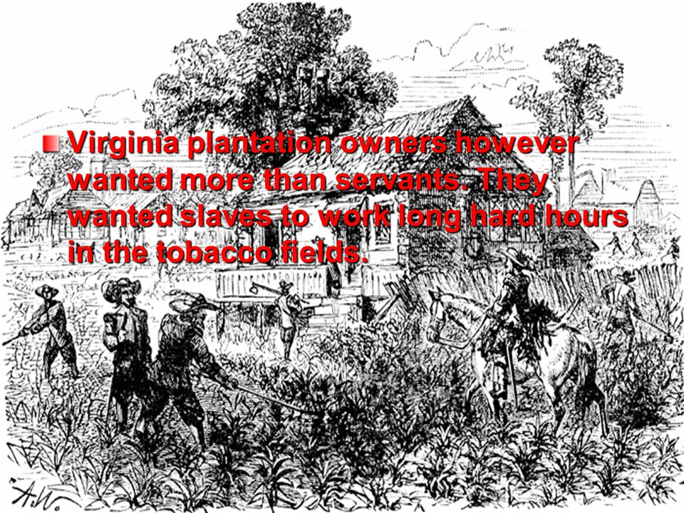 Virginia plantation owners however wanted more than servants.