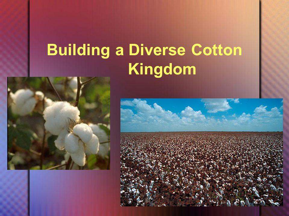 Building a Diverse Cotton Kingdom