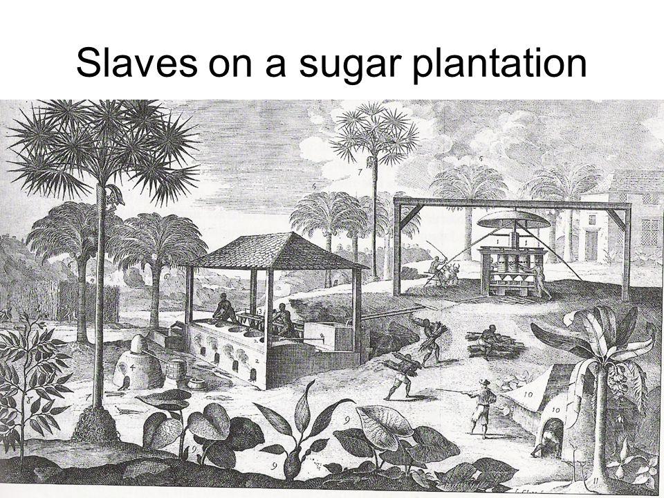 Negro slaves washing for diamonds in the Serro Do Frio