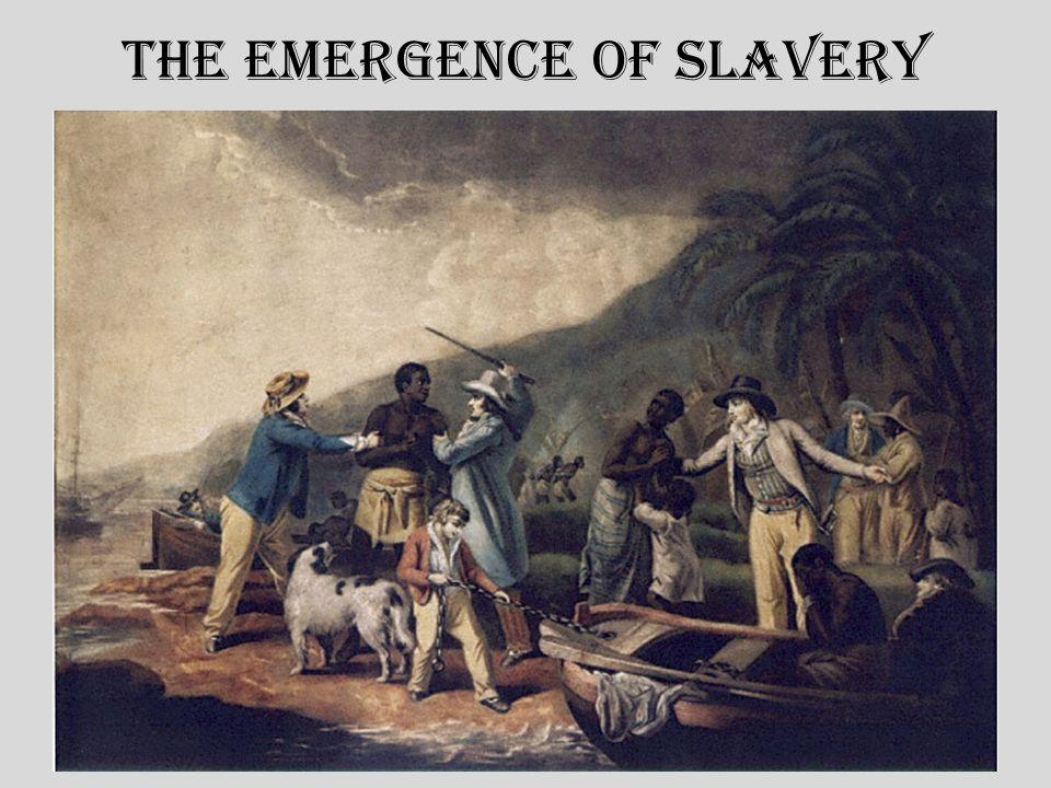 The Emergence of Slavery C.Why slavery.