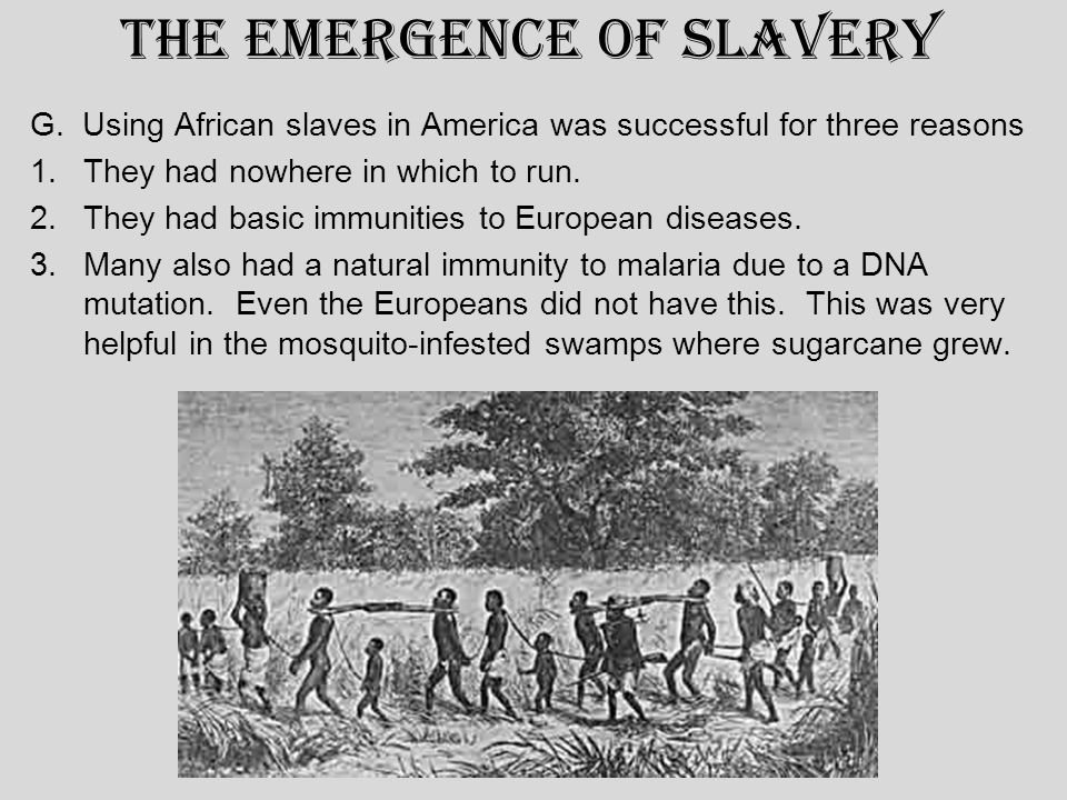 The Emergence of Slavery G. Using African slaves in America was successful for three reasons 1.They had nowhere in which to run. 2.They had basic immu