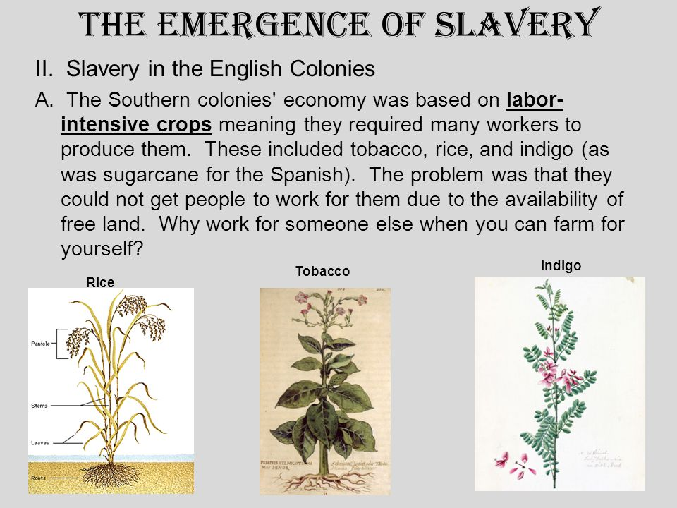 The Emergence of Slavery II. Slavery in the English Colonies A.