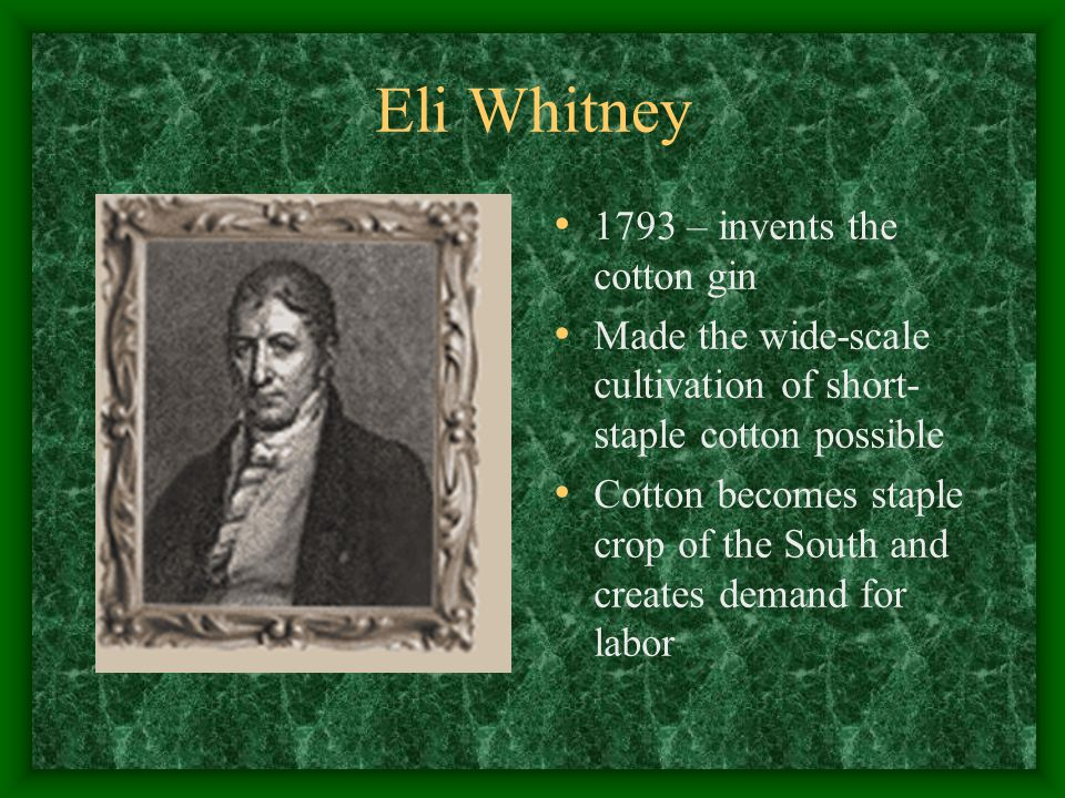 Eli Whitney 1793 – invents the cotton gin Made the wide-scale cultivation of short- staple cotton possible Cotton becomes staple crop of the South and creates demand for labor