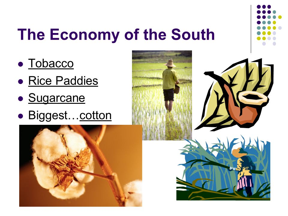 The Economy of the South Tobacco Rice Paddies Sugarcane Biggest…cotton