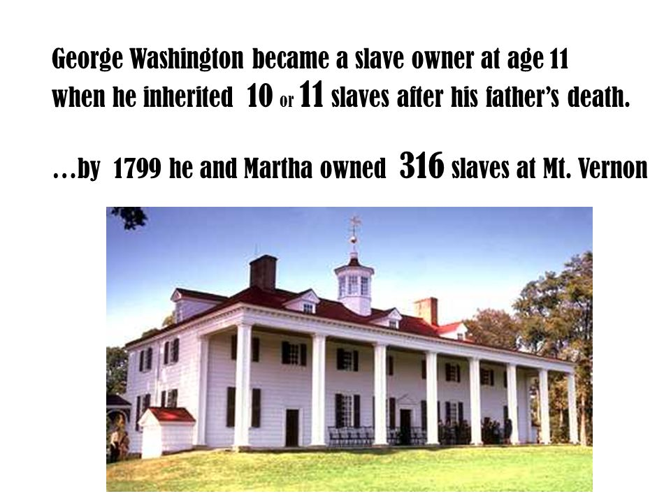 George Washington became a slave owner at age 11 when he inherited 10 or 11 slaves after his father's death. …by 1799 he and Martha owned 316 slaves a