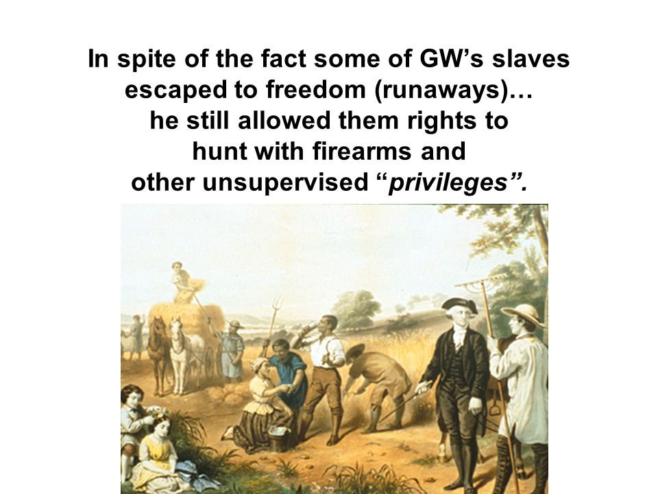 In spite of the fact some of GW's slaves escaped to freedom (runaways)… he still allowed them rights to hunt with firearms and other unsupervised privileges .