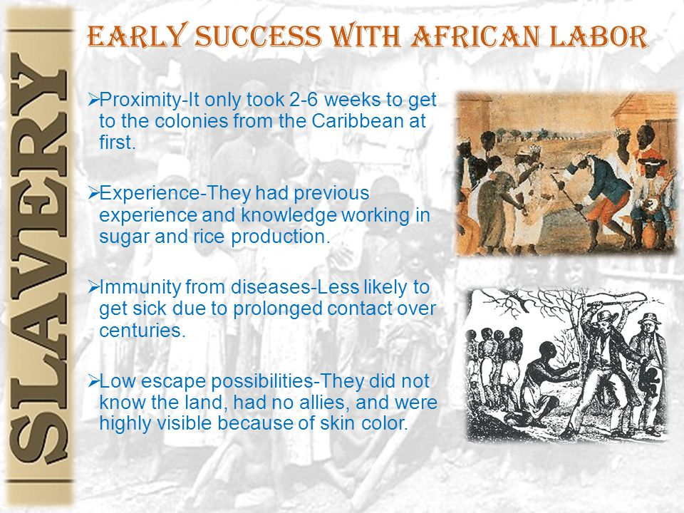 Early Success with African Labor  Proximity-It only took 2-6 weeks to get to the colonies from the Caribbean at first.  Experience-They had previous