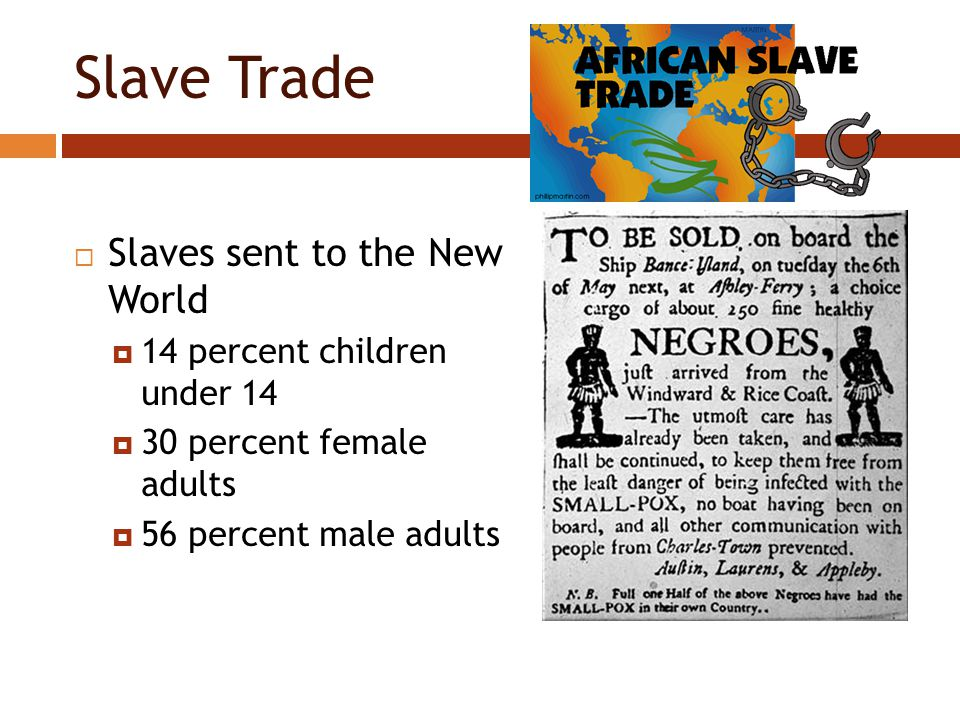 Slave Trade  Slaves sent to the New World  14 percent children under 14  30 percent female adults  56 percent male adults