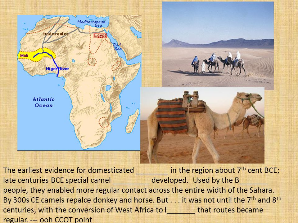 The earliest evidence for domesticated ________ in the region about 7 th cent BCE; late centuries BCE special camel _________ developed.