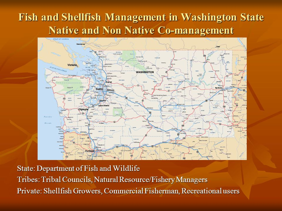 Fish and Shellfish Management in Washington State Native and Non Native Co-management State: Department of Fish and Wildlife Tribes: Tribal Councils, Natural Resource/Fishery Managers Private: Shellfish Growers, Commercial Fisherman, Recreational users