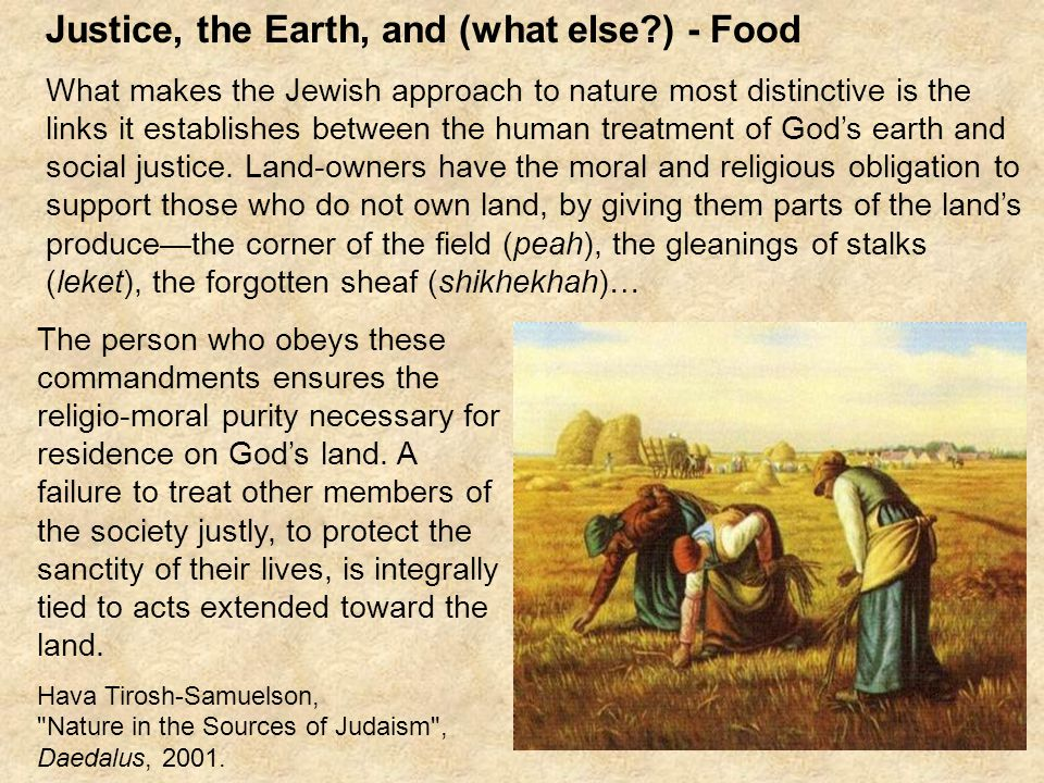Justice, the Earth, and (what else ) - Food What makes the Jewish approach to nature most distinctive is the links it establishes between the human treatment of God's earth and social justice.