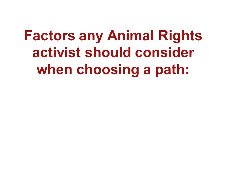 Factors any Animal Rights activist should consider when choosing a path:
