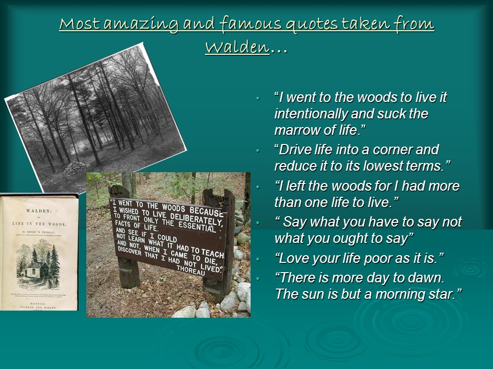 Most amazing and famous quotes taken from Walden … I went to the woods to live it intentionally and suck the marrow of life. I went to the woods to live it intentionally and suck the marrow of life. Drive life into a corner and reduce it to its lowest terms. Drive life into a corner and reduce it to its lowest terms. I left the woods for I had more than one life to live. I left the woods for I had more than one life to live. Say what you have to say not what you ought to say Say what you have to say not what you ought to say Love your life poor as it is. Love your life poor as it is. There is more day to dawn.