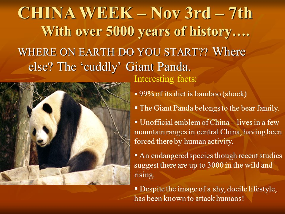 With over 5000 years of history…. WHERE ON EARTH DO YOU START?? Where else? The 'cuddly' Giant Panda. CHINA WEEK – Nov 3rd – 7th Interesting facts: 