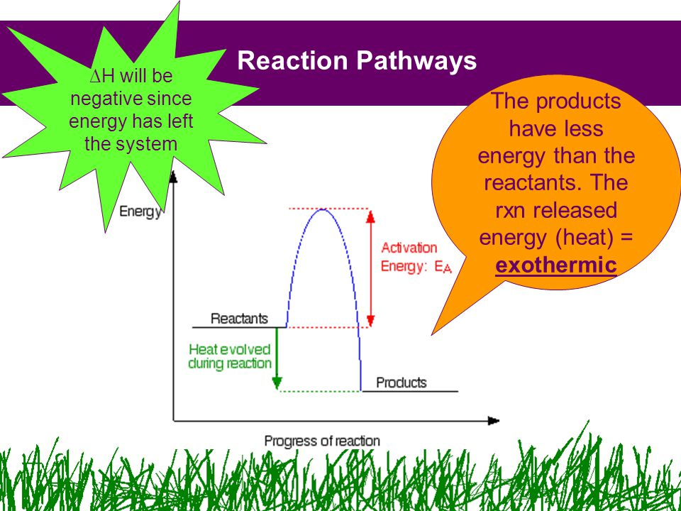 Reaction Pathways The products have less energy than the reactants.