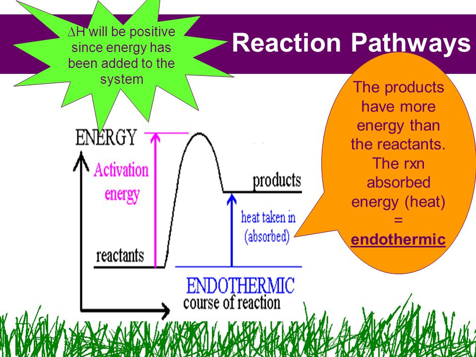 Reaction Pathways The products have more energy than the reactants.
